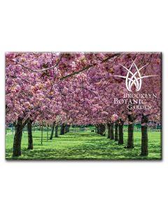 Garden Logo Cherry Blossom Magnet